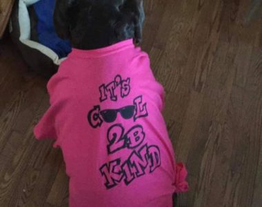 "Amber the dog wearing our signature ""Cool 2B Kind"" pink shirt."